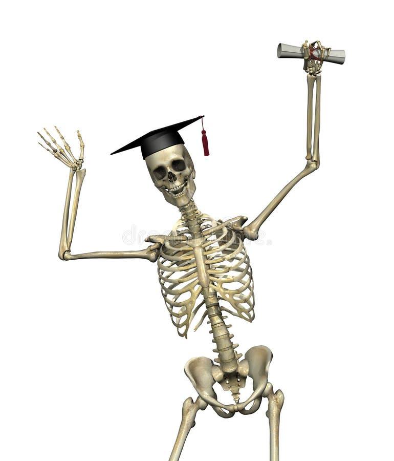 Graduado del esqueleto ilustración del vector