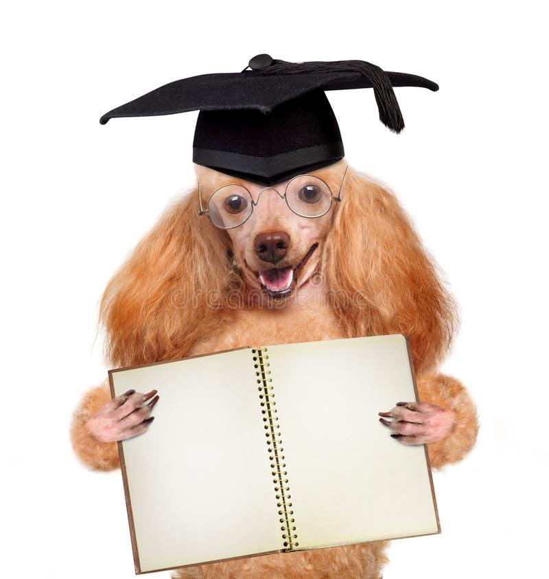 Graduado do cão foto de stock