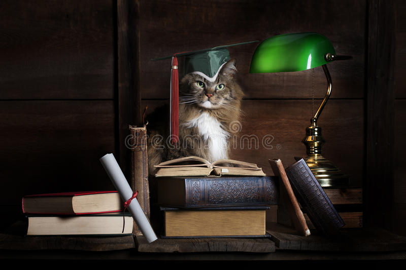 Graduate Studying Cat royalty free stock images