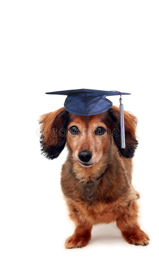 Graduation de chienchien images stock