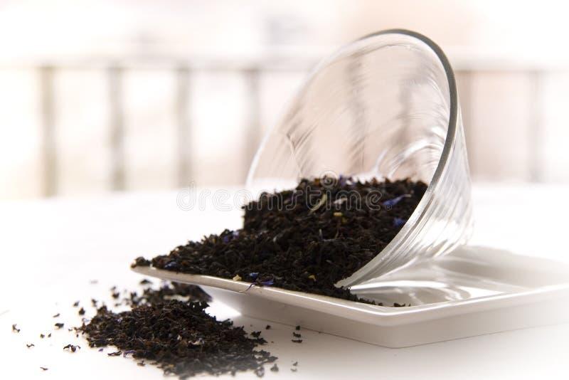 Graf-Grau-Teeblätter stockfoto