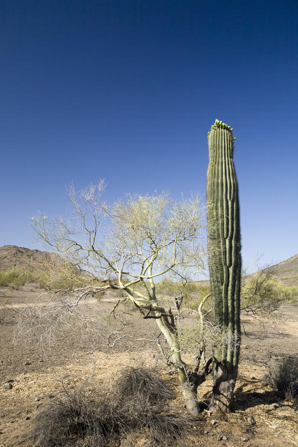 Graffette dell'Arizona fotografie stock