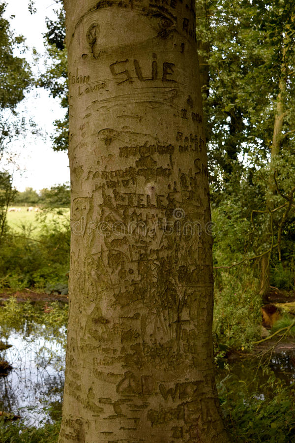 Graffiti drzewo obrazy stock