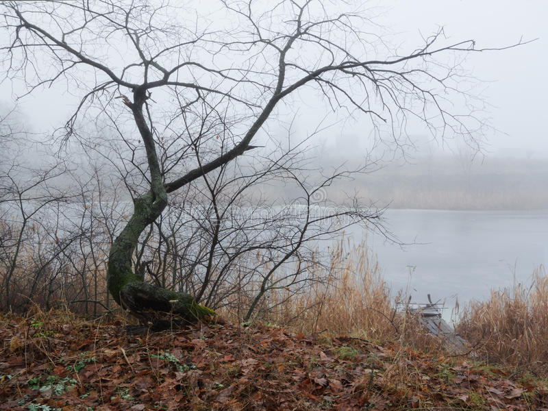 Grafic tree. Beauty morning's fog over the mystic river stock photography