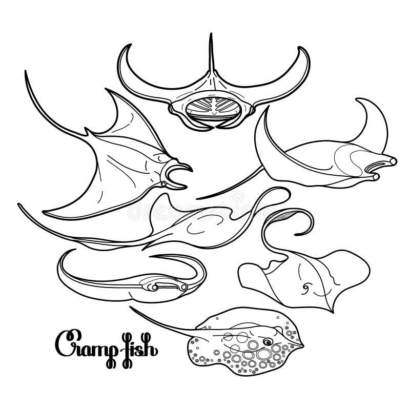 Graficzna drętwienie ryba kolekcja ilustracja wektor