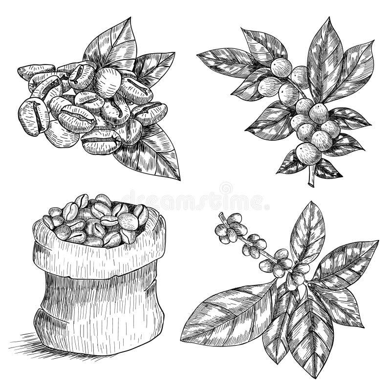 Graficzna kawa ustawiająca odizolowywającą na białym tle Wektoru liście, kwiaty i fasole, Kwieciste dekoracje ilustracji