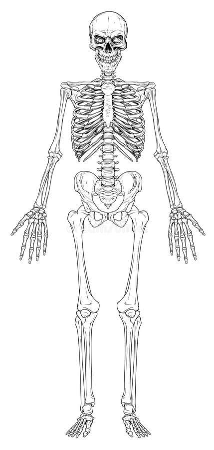 Graficzny wektor szkieletowy kości ludzkiej czarno-białej ilustracja wektor