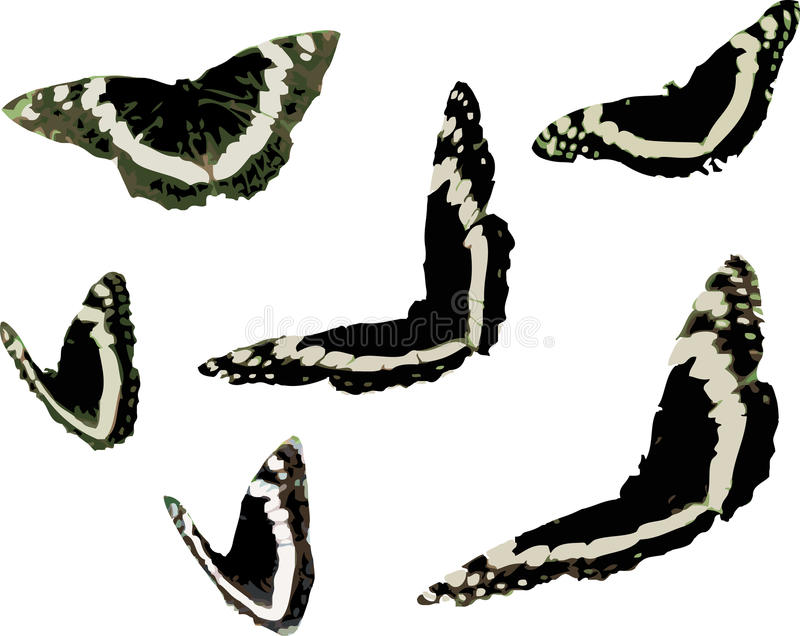 Grafisch de Klemart. van het vlinderinsect royalty-vrije stock afbeelding