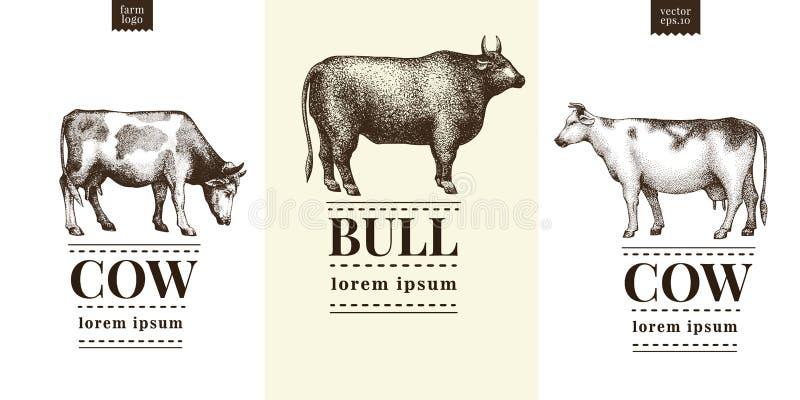 Grafisch koe en stierensilhouet, hand getrokken uitstekende illustraties Vector met drie embleemmalplaatjes dat wordt geplaatst stock illustratie