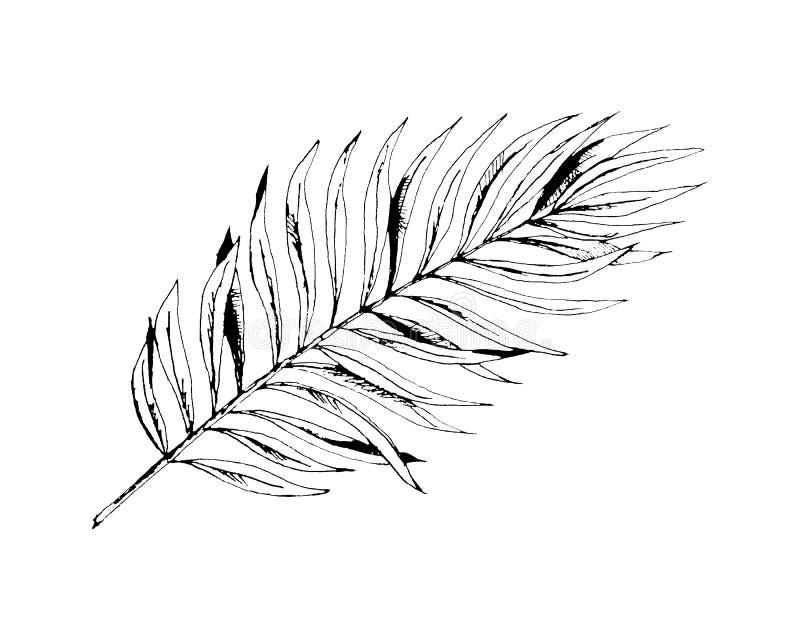 Grafische Anlage des Palmenurlaubs der Tropen Druckschwarzweiss-Art, exotischer Blumendschungel vektor abbildung