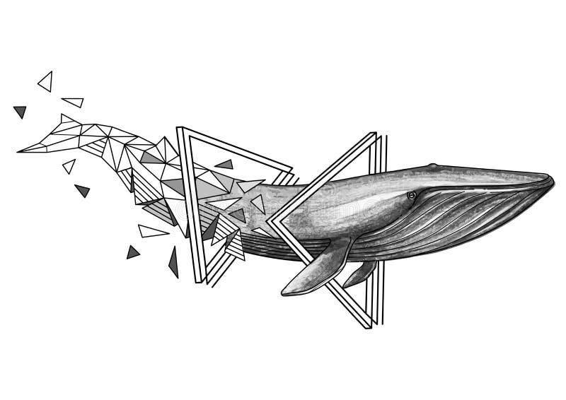 Grafische blauwe vinvis stock illustratie