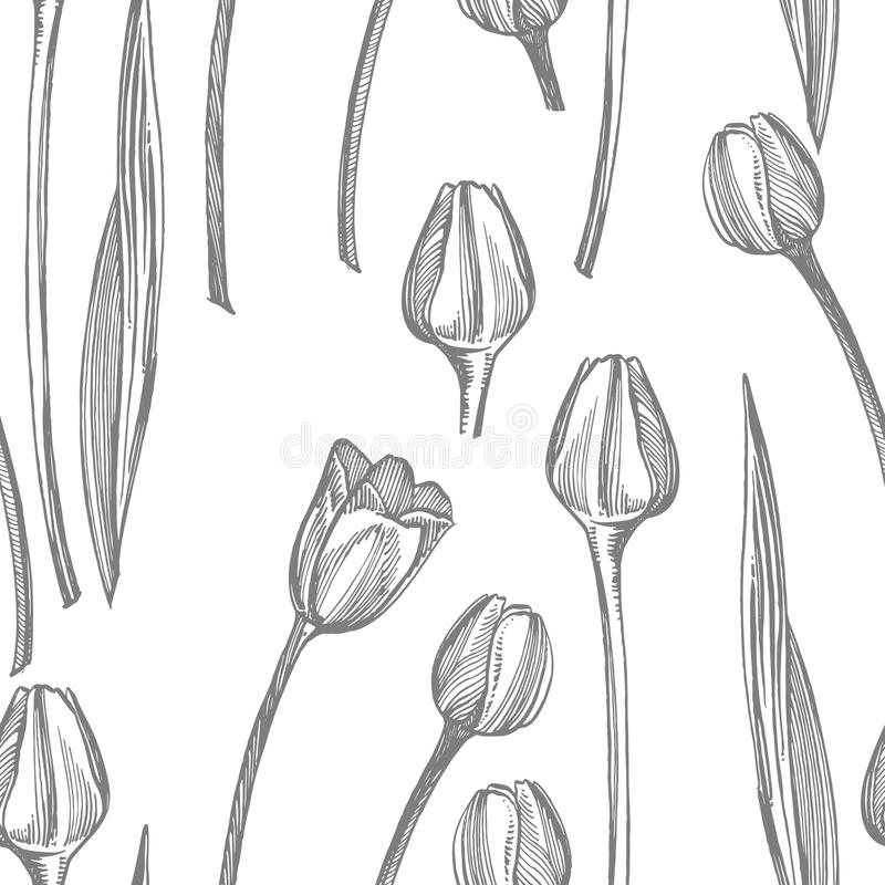 Grafische Skizzenillustration der Tulpenblume Botanische Betriebsillustration Kraut-Skizzensatz der Weinlese medizinischer der Ti stock abbildung