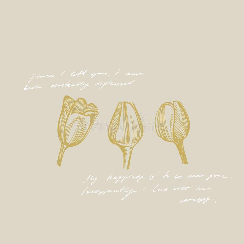 Grafische Skizzenillustration der Tulpenblume Botanische Betriebsillustration Kraut-Skizzensatz der Weinlese medizinischer der Ti lizenzfreie abbildung