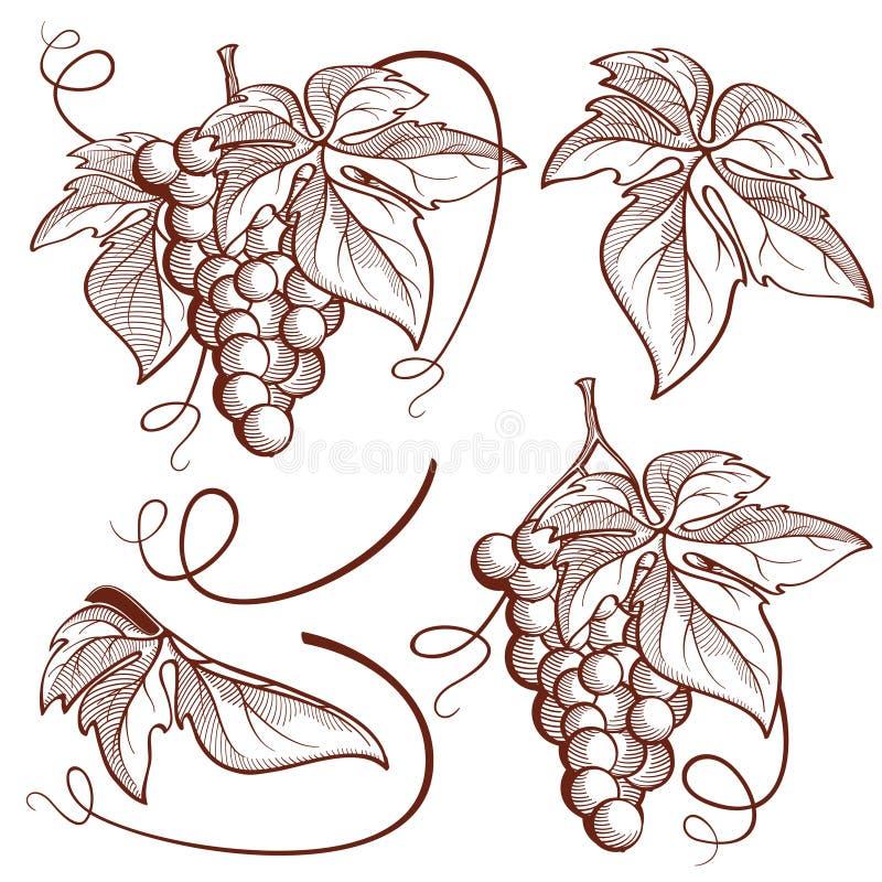 Grafische vector vastgestelde bos van druiven en wijnstokelementen stock afbeelding