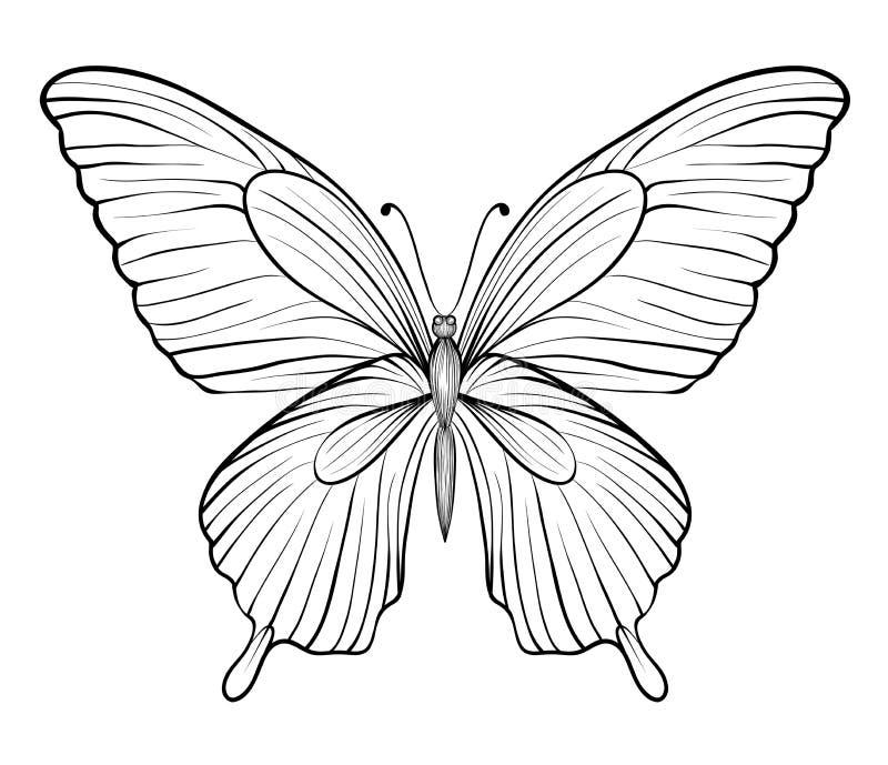 Grafische zwart-witte vlinder. één geïsoleerd op wit vector illustratie