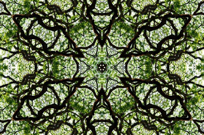 Grafisk bakgrund för trevlig modell av bladet och trädmarkisen vektor illustrationer