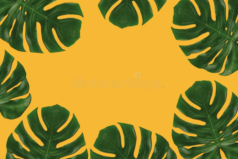 Grafisk sammansättning av tropiska sidor arkivbilder