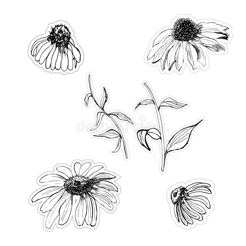 Grafiska den drog klistermärkehanden skissar med echinaceablommor isolatated på vit bakgrund stock illustrationer