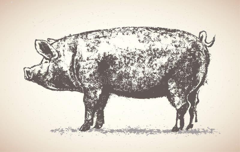 Grafiskt svin royaltyfri illustrationer