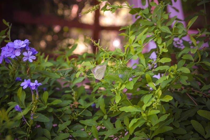 Grafito floreciente con la mariposa en ella profundidad baja o del primer imagen de archivo libre de regalías