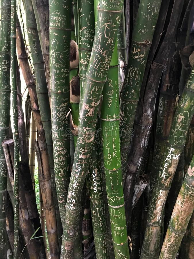 Grafitti Bamboo, Campinas park, Sao Paulo Stare Brazil. Bamboo covered in graffiti, Campinas park, Sao Paulo Stare Brazil. unusual texture, wood royalty free stock photo