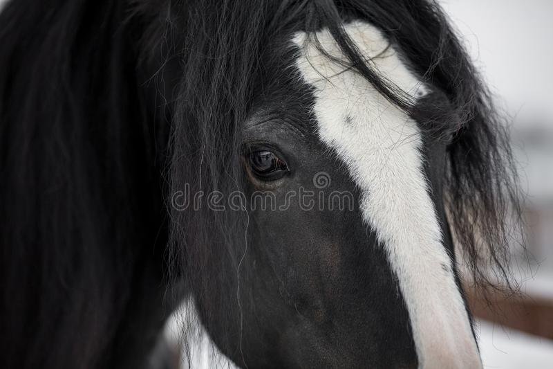 Grafschafts-Pferd stockbilder