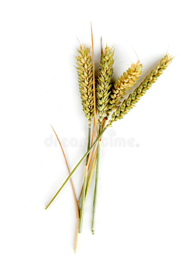 Download Grain stock image. Image of meal, corn, seed, organic - 15399175