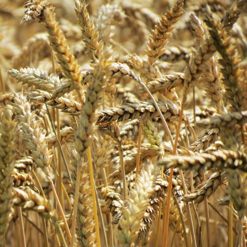 Grain Free Public Domain Cc0 Image