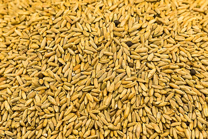 Grain background light brown long millet ingredients brewing malt bakery base rustic eco substrate web site stock photo