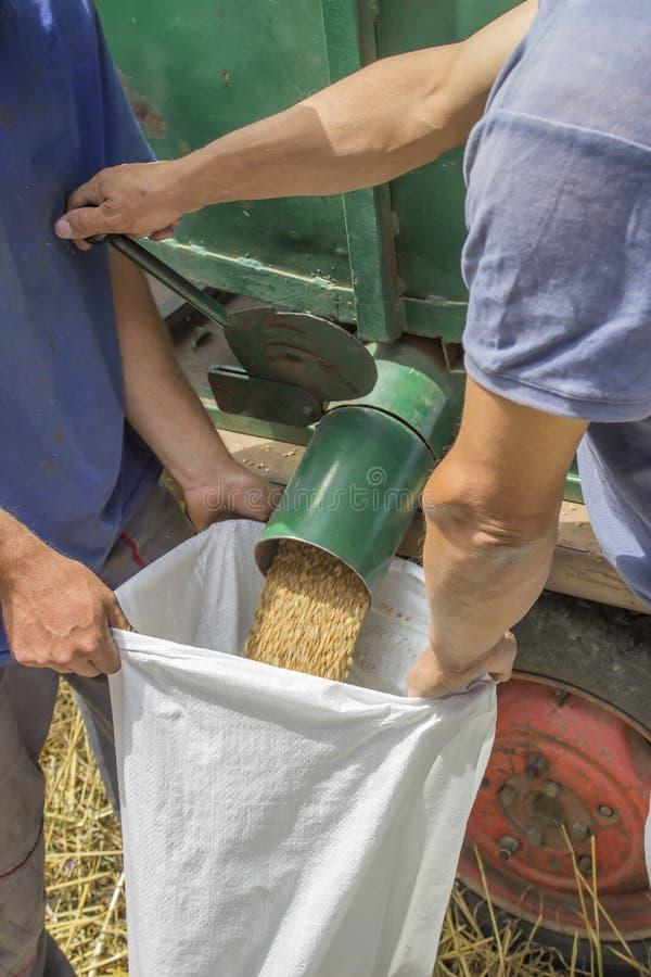Grain bag filling royalty free stock photos