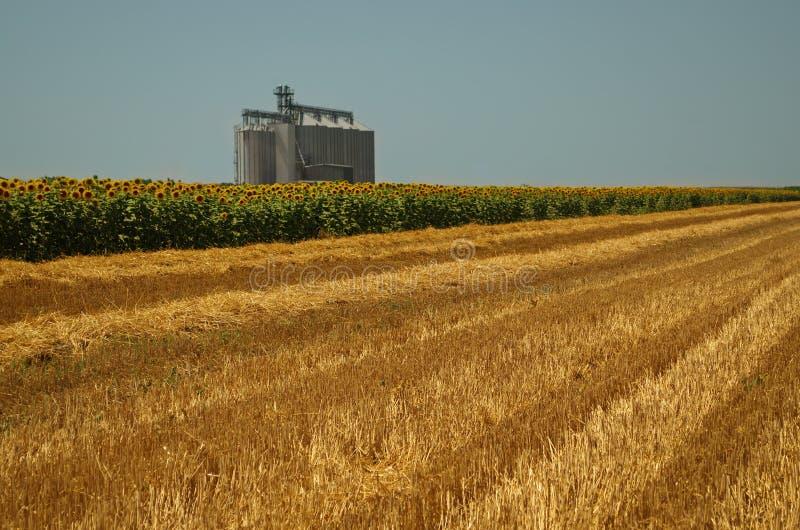 Grain bins in a field royalty free stock photo