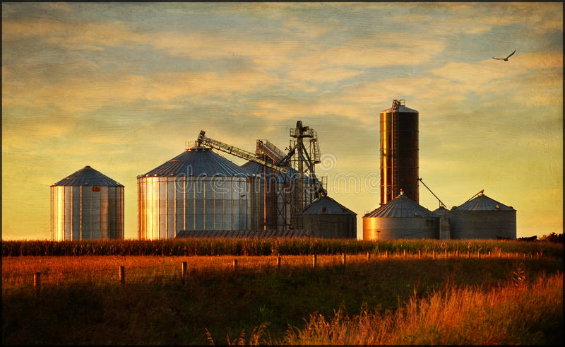 Grain bins. Sparkle steel sides in the setting sun rays stock image