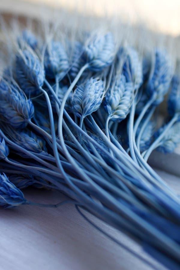 Grain bleu de blé photo stock