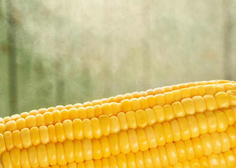 Boiled corn with steam closeup on a green background stock image