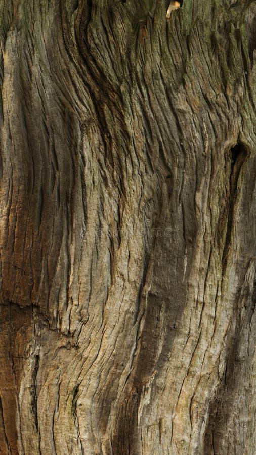 Grain d'arbre photographie stock