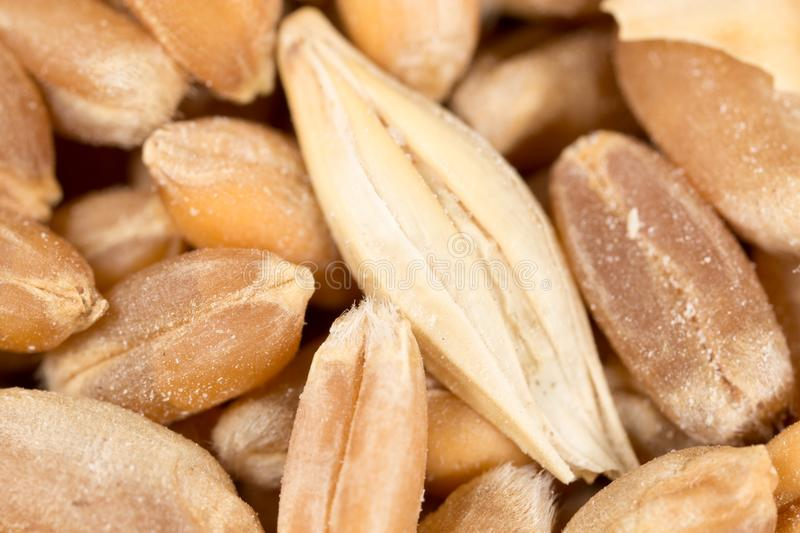 Grain de blé Instruction-macro superbe image stock