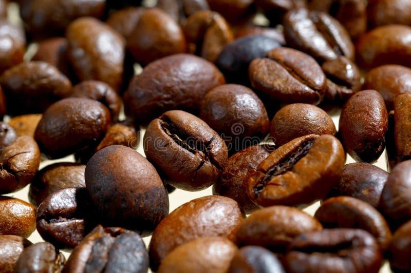 Grain de café image stock