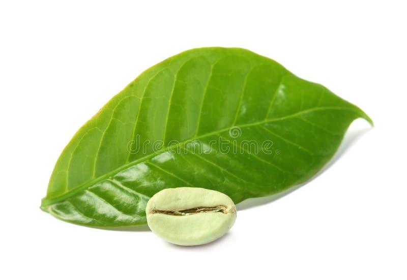 Grain de café vert et feuille fraîche photo stock