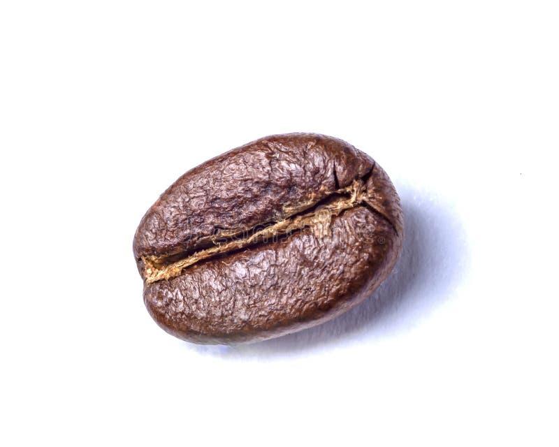 Grain de caf? sur le fond blanc photos stock