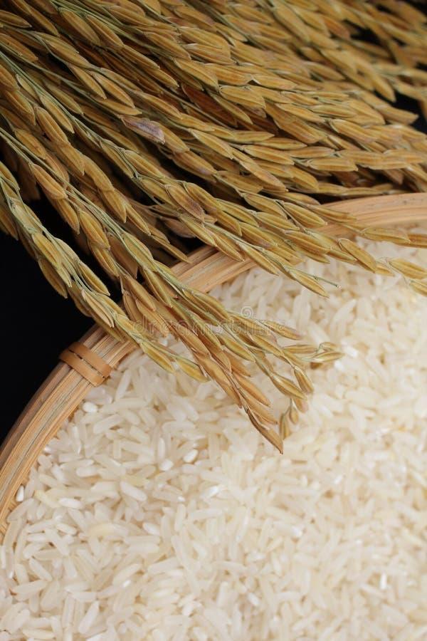 Grain de riz images libres de droits
