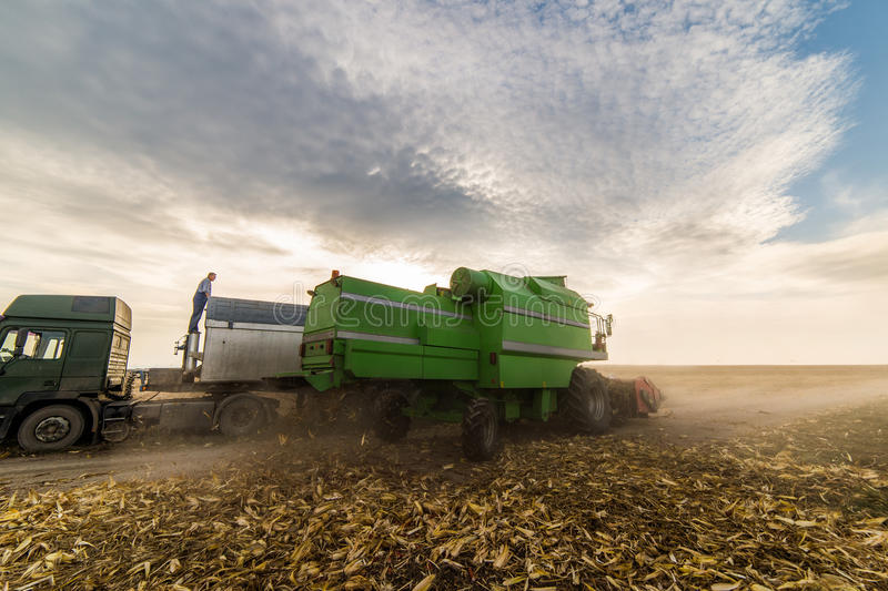 Grain de versement de maïs dans la remorque de tracteur images libres de droits