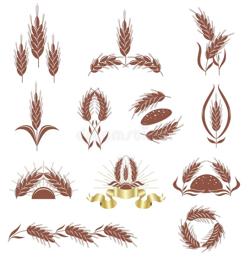 Grain Ears. Stock Image