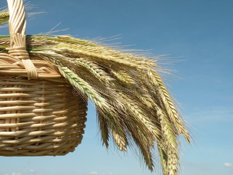 Download Grain ears stock image. Image of clear, wicker, ripe - 16673943