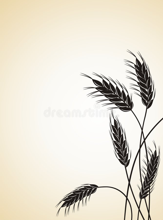 Download Grain Ears. Royalty Free Stock Images - Image: 8540229