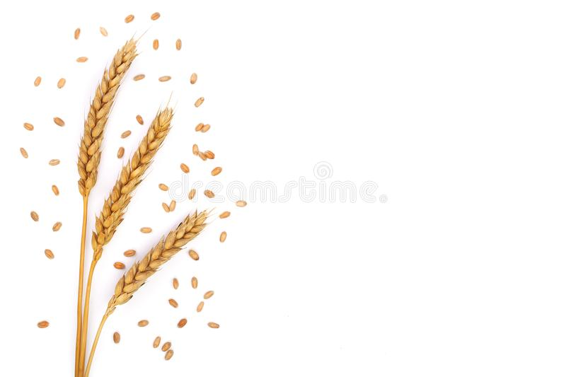 Grain and ears of wheat isolated on white background with copy space for your text. Top view. Flat lay pattern stock photography