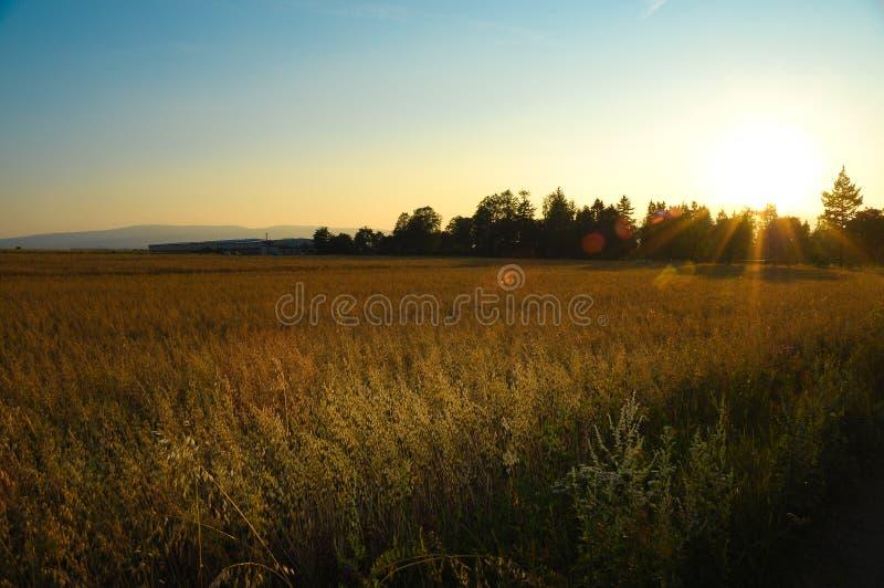 Grain field stock photography