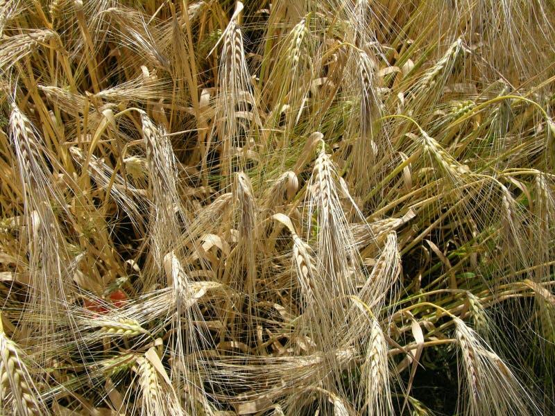 Grain stock photos