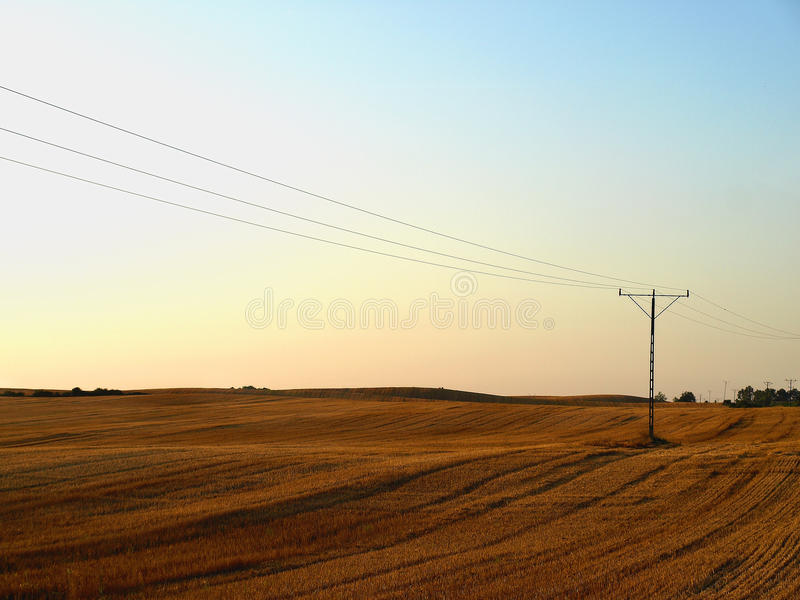 Grain field at sunset royalty free stock photo