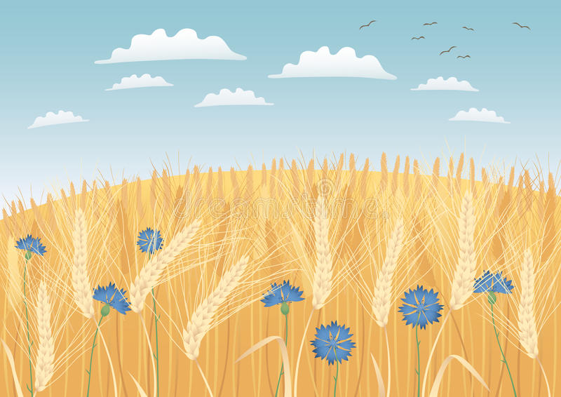 Download Grain fields stock vector. Illustration of scenic, clouds - 20736463