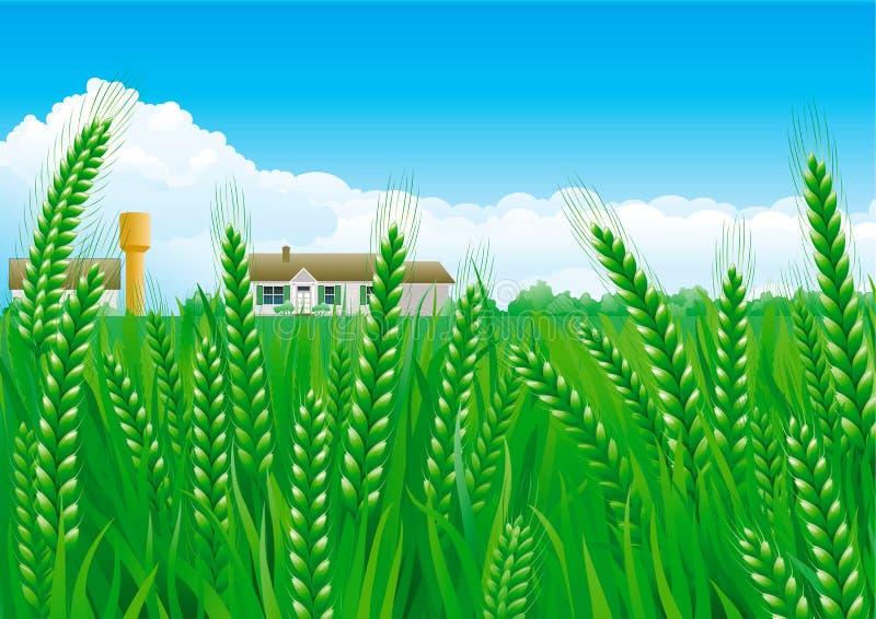 Download Grain fields stock vector. Illustration of landscape - 39511082